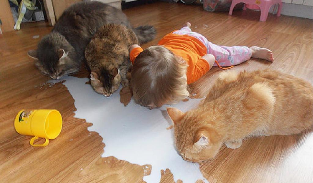 gaziantep ağzı, çocuk ve kedi