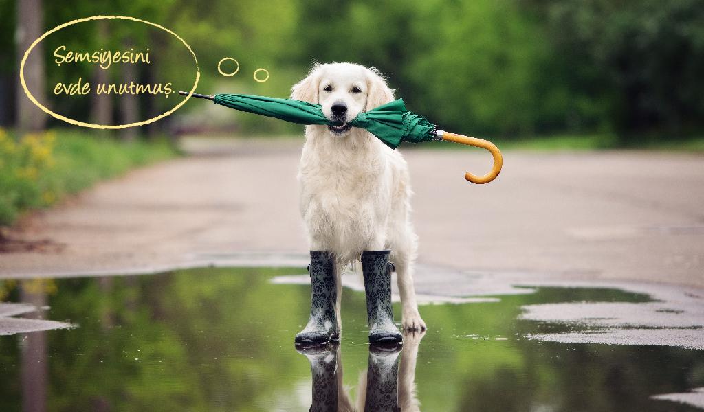 sokak hayvanları, köpek sevgisi