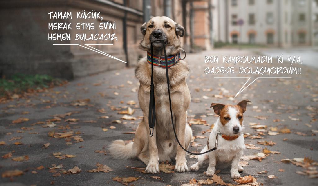 sevimli köpekler, köpek sevgisi