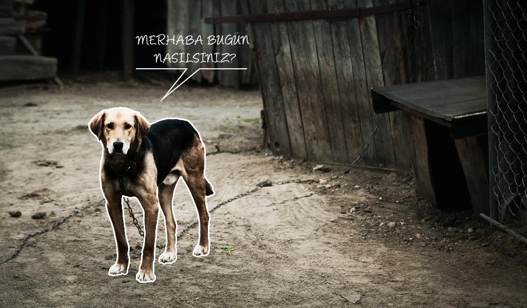 sevimli köpekler, sokak hayvanları