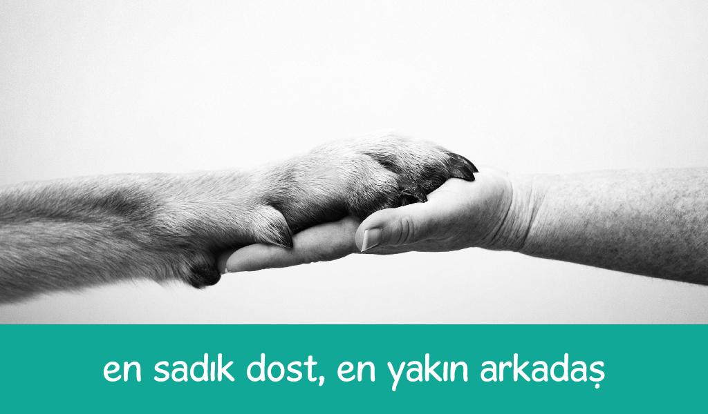 sokak hayvanları, köpek