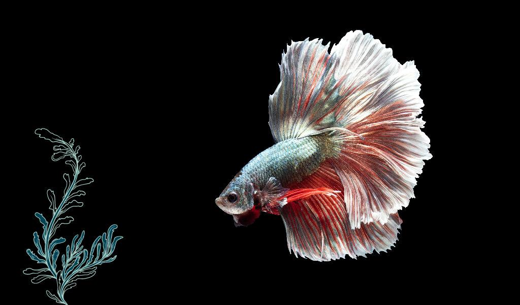 balık, ilginç balıklar