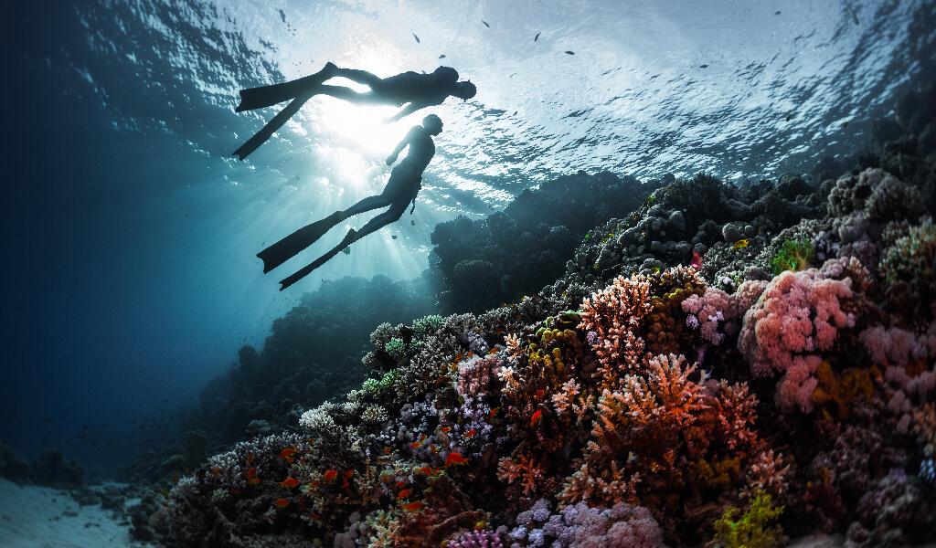 diving, dalış etkinlikleri