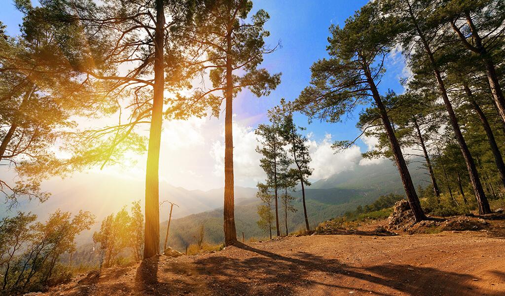 orman, doğa