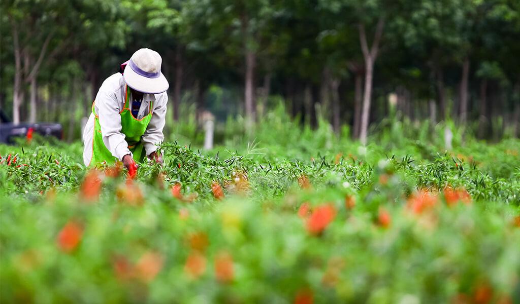 tarım, orman