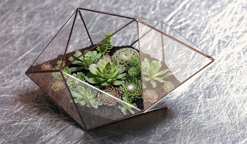 akvaryum, aquarium, terrarium