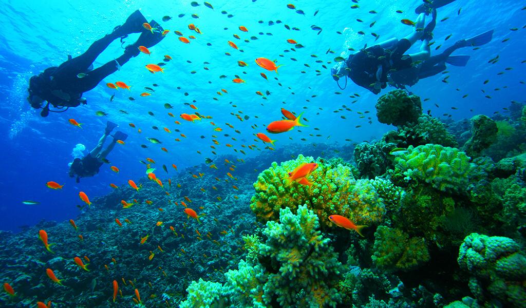 denizli, muğla, spor, diving