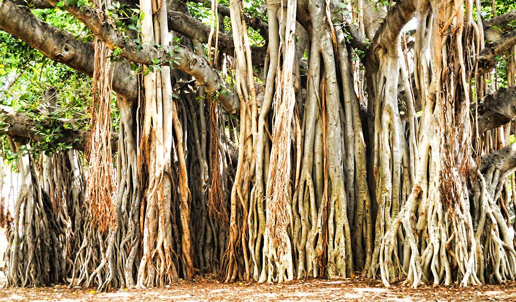 ilginç ağaçlar, orman