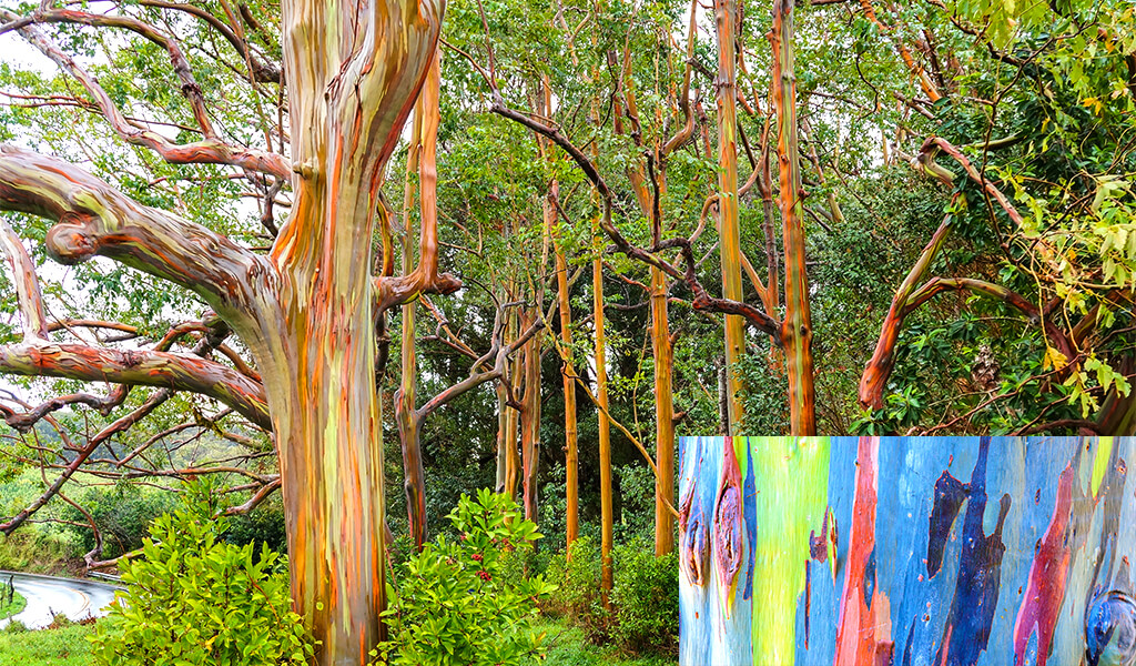 orman, ilginç ağaçlar