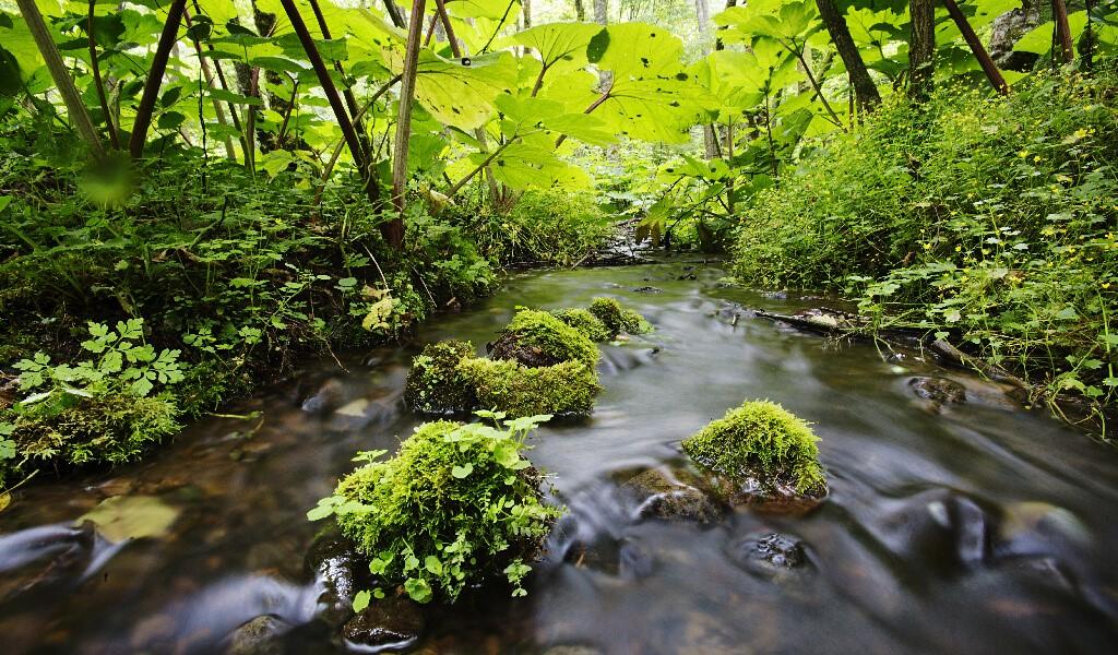 doğa, orman, göl