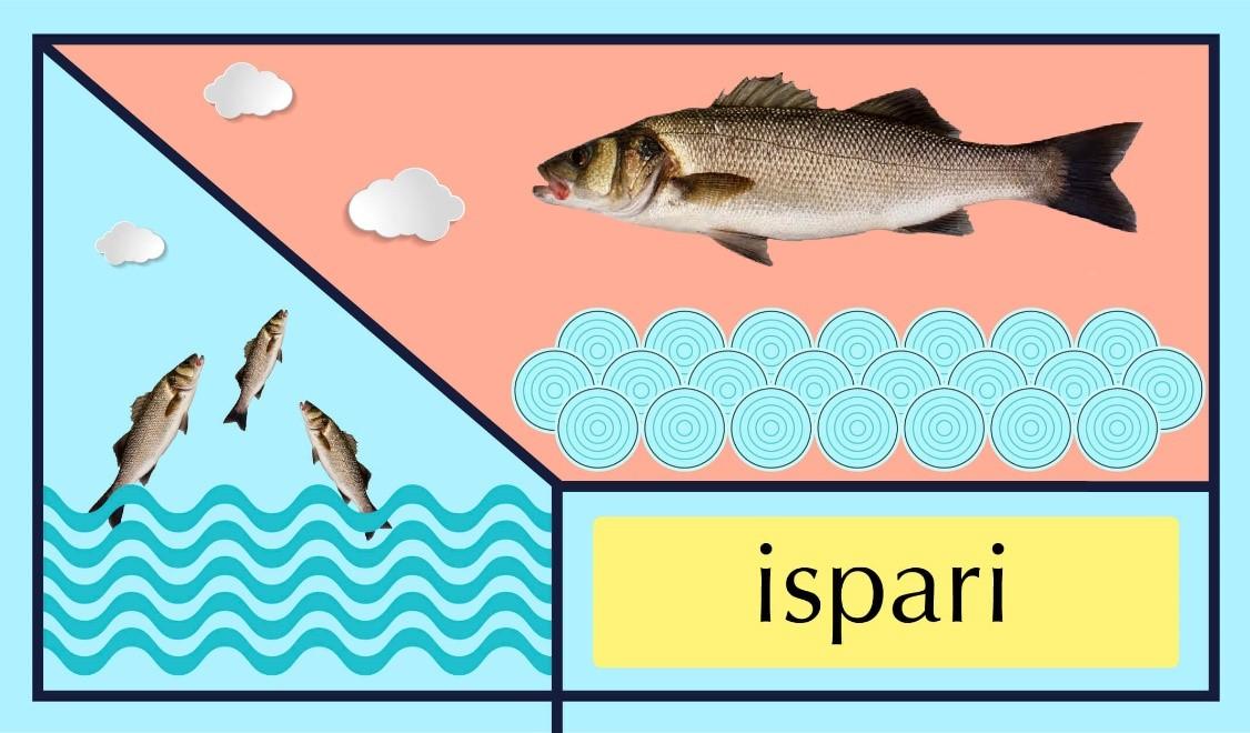 balık türleri