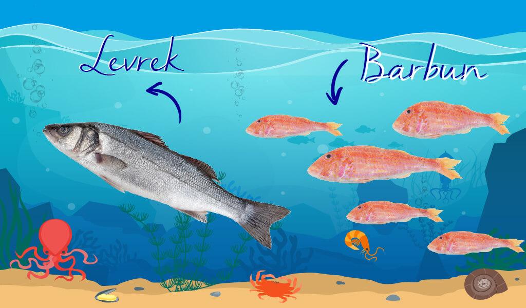 mevsim balıkları