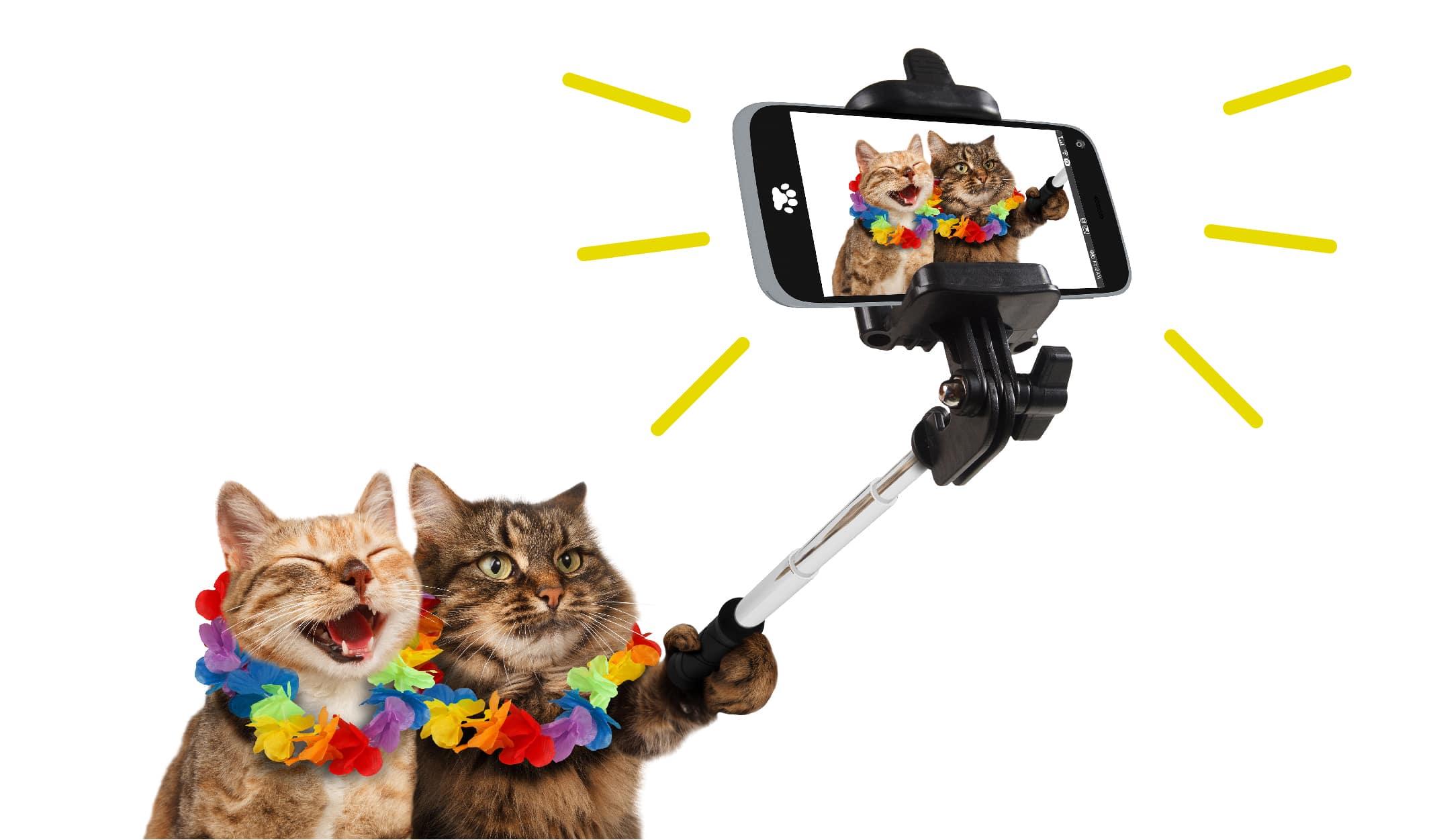 komik kediler