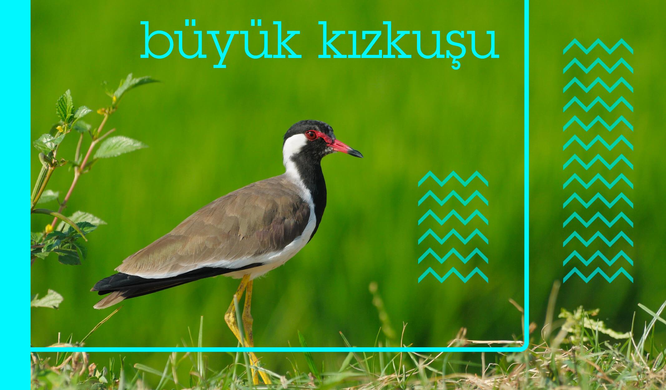 türkiyedeki kuş türleri