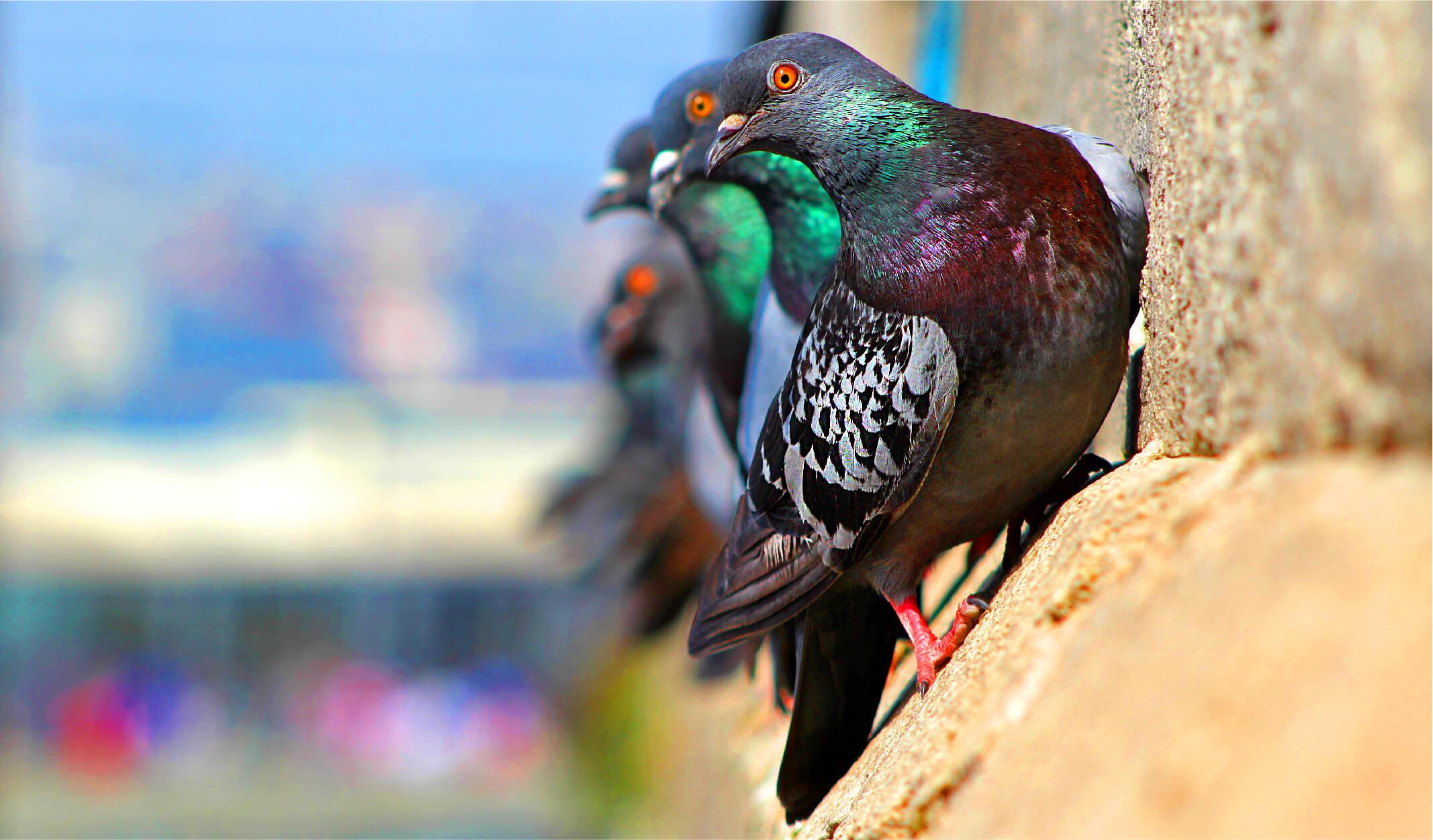 En akıllı kuşlar. Onlar ne