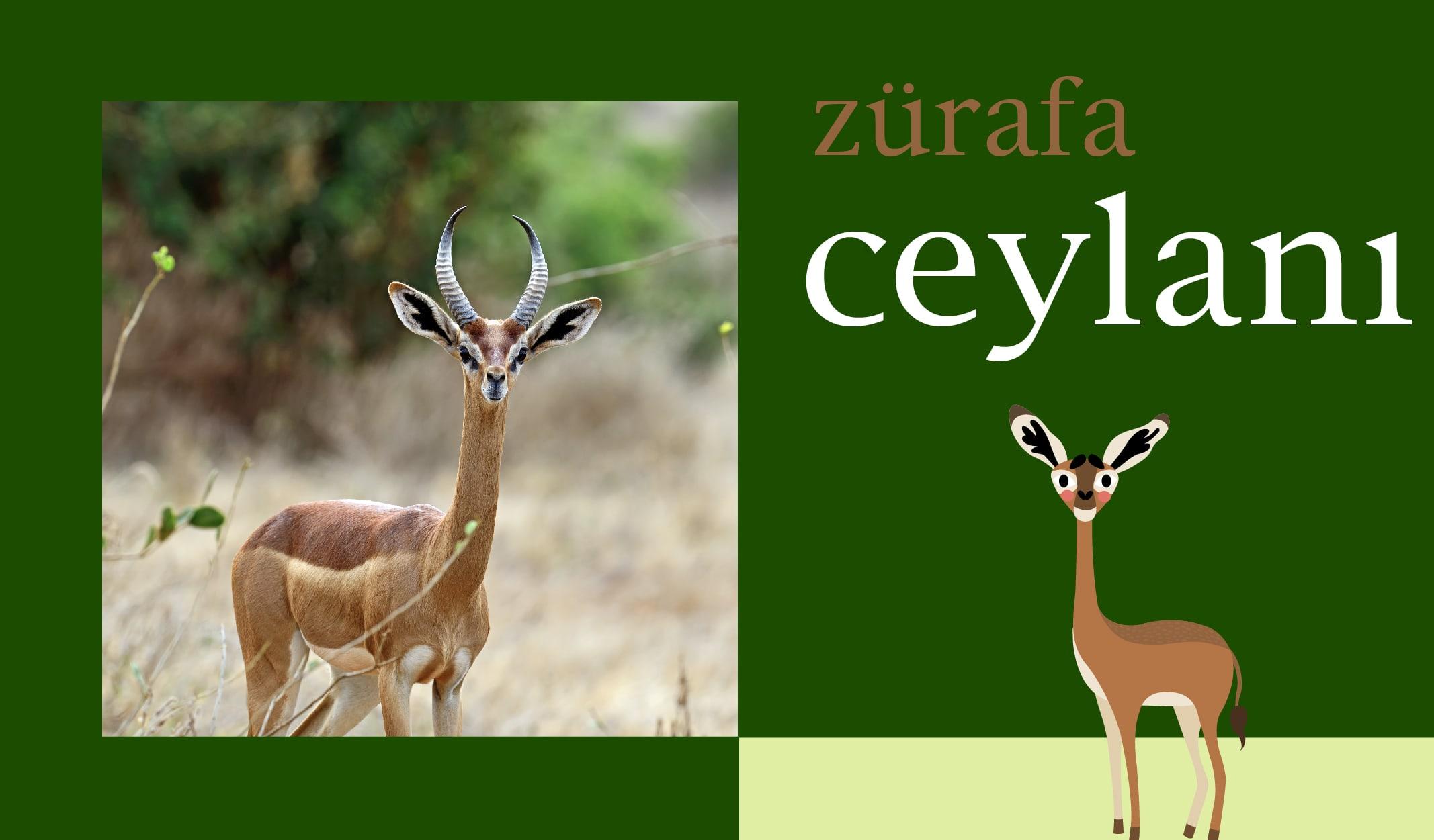 ilginç hayvanlar