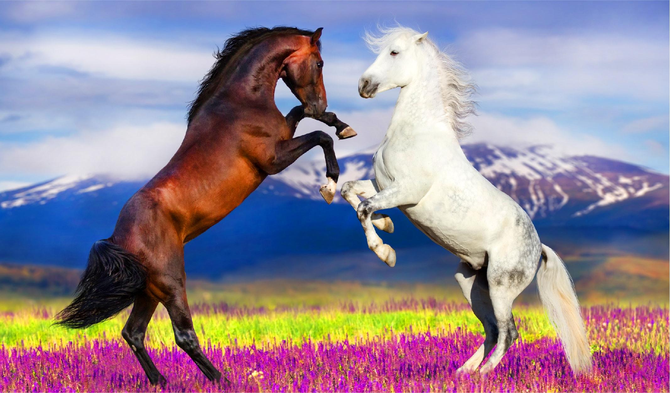 at türleri