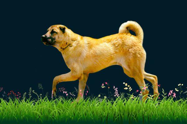 köpek türleri