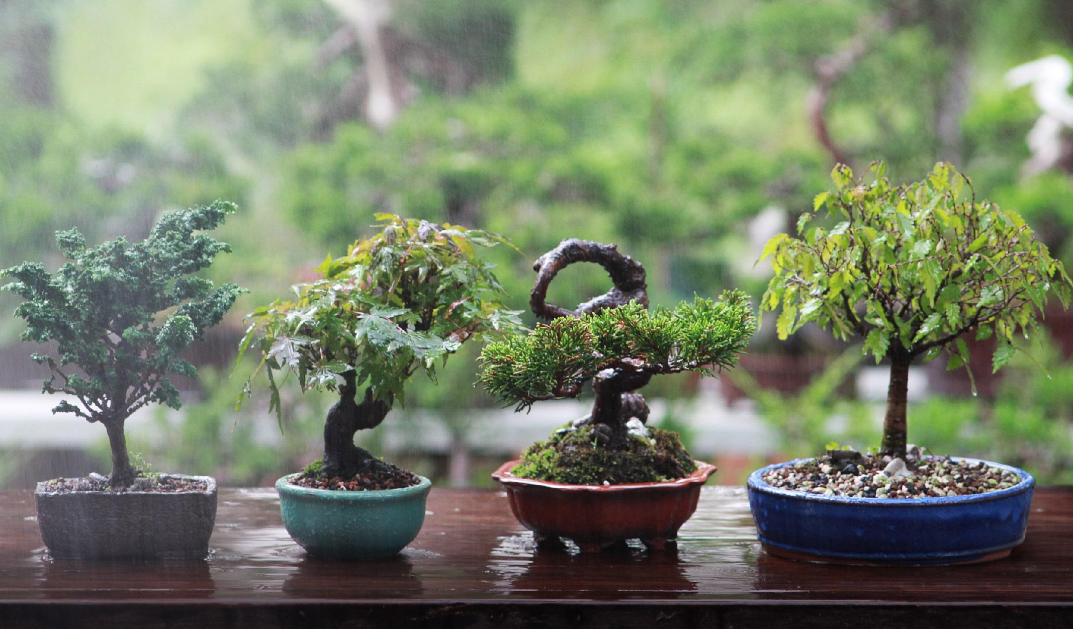 minyatür ağaç