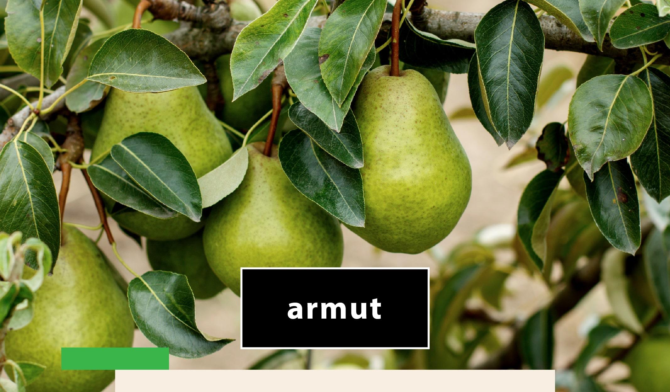 meyve ağaçları