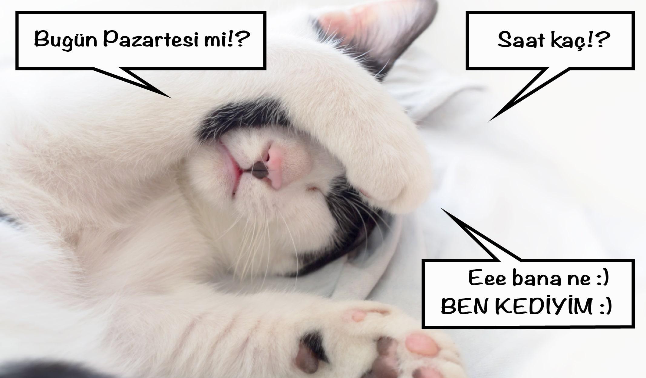 kedi, cat