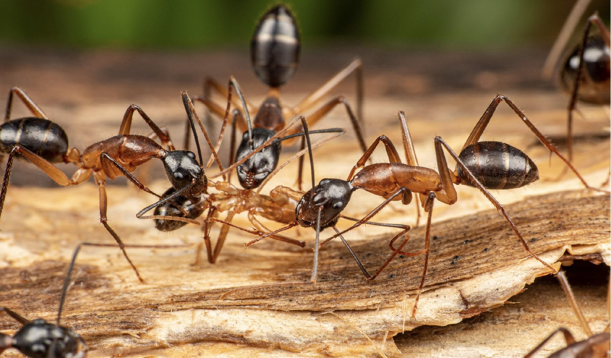 karınca belgeseli